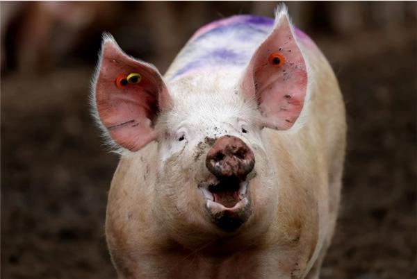 农业农村部:要让养殖场户更方便快捷买到优质的兽用生物制品